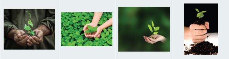 Stock Photo Clichés Plant Hands